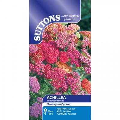 Achillea Summer Berries