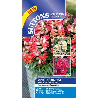 Antirrhinum Antiquity Sunset Mix