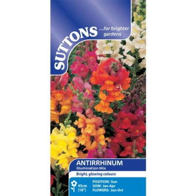 Antirrhinum Illumination Mix