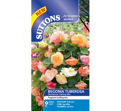 Begonia Parisienne Trailing Mix