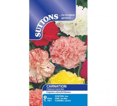 Carnation* Chabaud Giant Mix