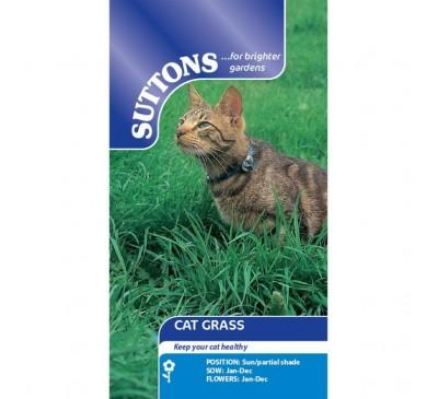 Cat'S Grass*