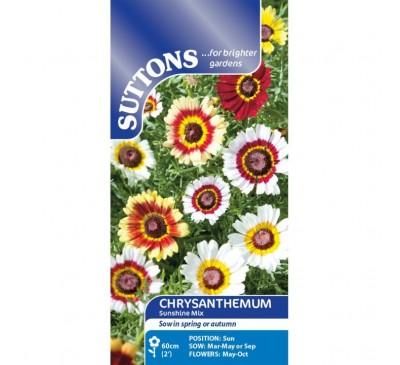 Chrysanthemum Sunshine Mix
