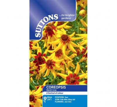 Coreopsis Mardi Gras
