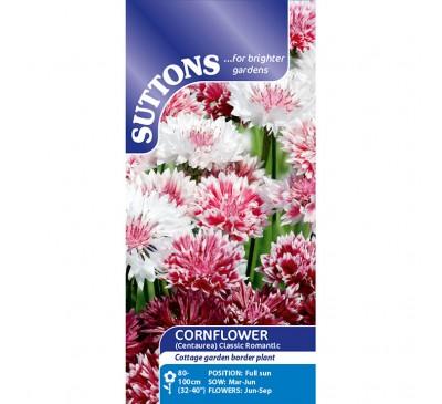 Cornflower Classic Romantic (Centaurea)