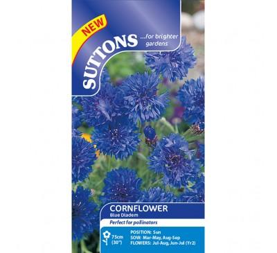 Cornflower Blue Diadem