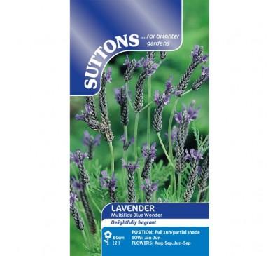 Lavender* Multifida Blue Wonder