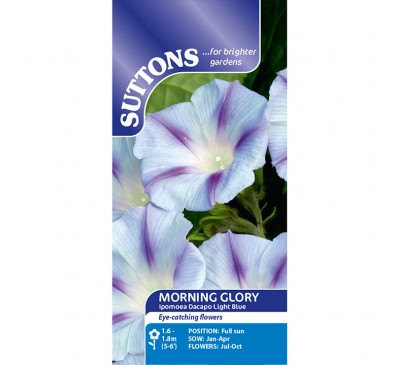 Morning Glory Ipomoea Dacapo Light Blue
