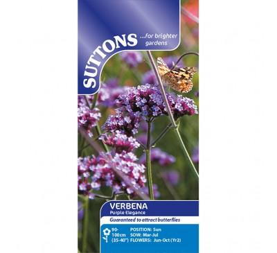 Verbena Purple Elegance