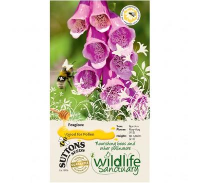 Wildlife Garden - Foxglove