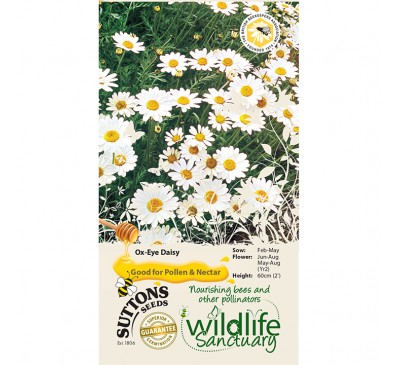 Wildlife Garden - Ox-Eye Daisy