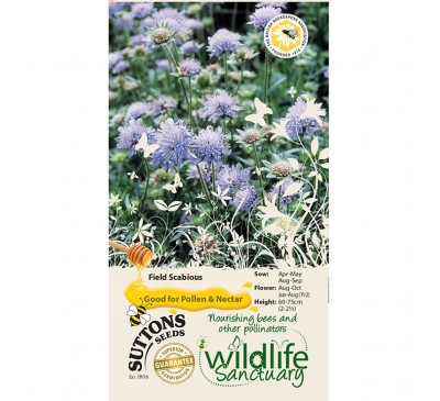 Wildlife Garden - Field Scabious