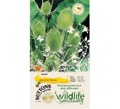 Wildlife Garden - Teasel