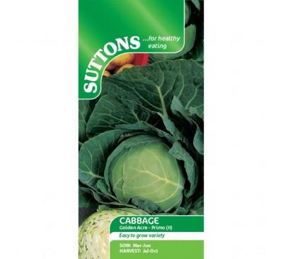 Cabbage Golden Acre Primo (11)