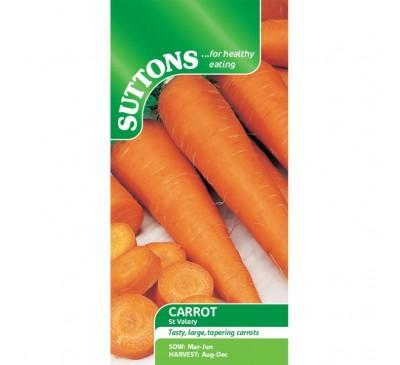 Carrot St.Valery