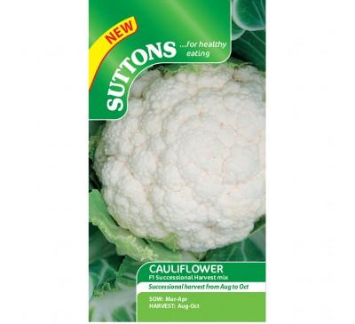Cauliflower Continuity - Successional Harvest