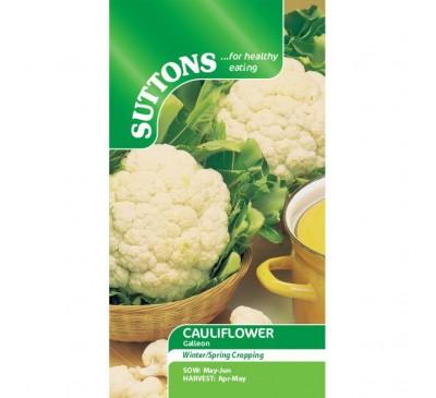 Cauliflower Galleon