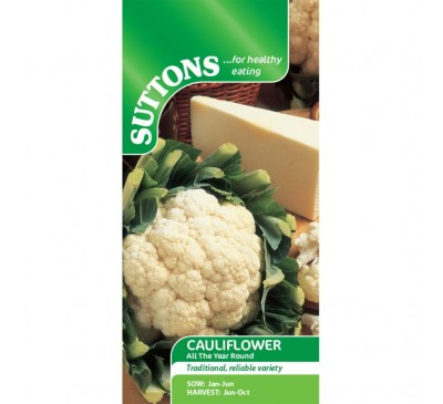 Cauliflower All The Year Round