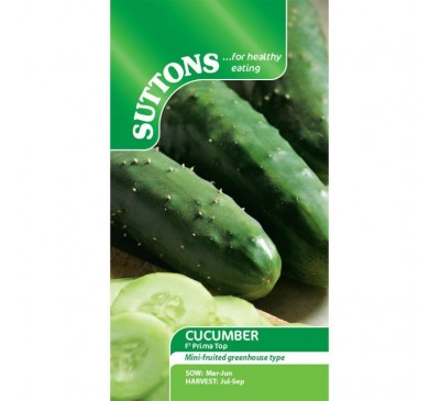 Cucumber Prima Top F1