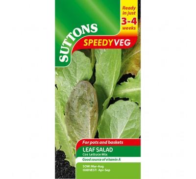 Leaf Salad Cos Lettuce