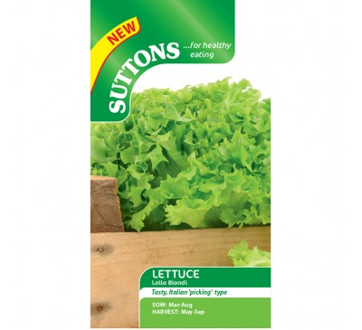 Lettuce Lollo Biondo