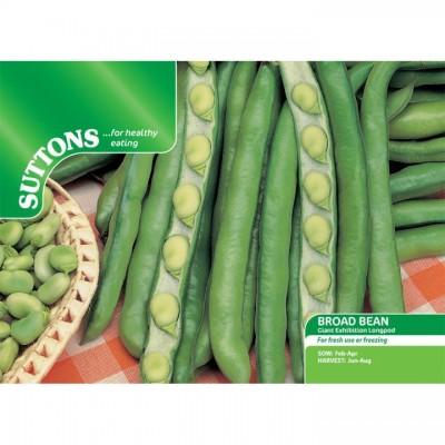 Bean Broad Bean De Monica