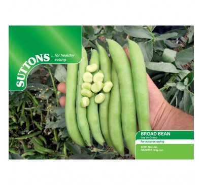Bean Broad Bean Giant Exhibition Longpod