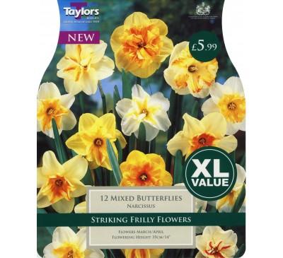 Xl Narcissi Mixed Butterflies