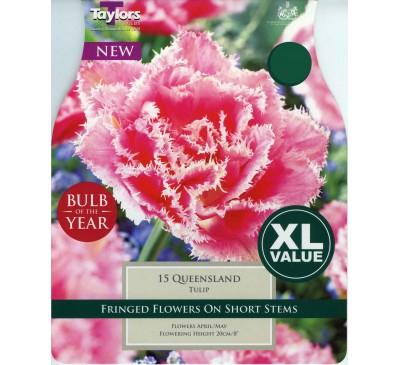 Xl Tulip Queensland