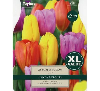 XL Tulip Sorbet Fusion