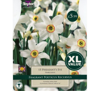 Xl Narcissi Pheasant'S Eye