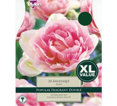 Xl Tulip Angelique