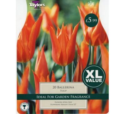 Xl Tulip Ballerina