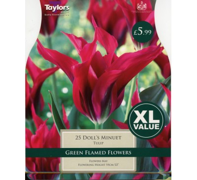 Xl Tulip Doll'S Minuet
