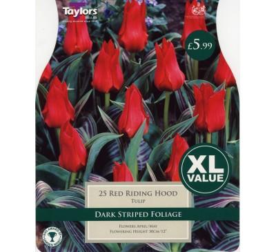 Xl Tulip Red Riding Hood