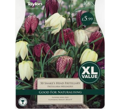 Xl Fritillaria Meleagris