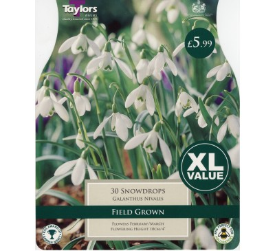 Xl Snowdrops (Galanthus