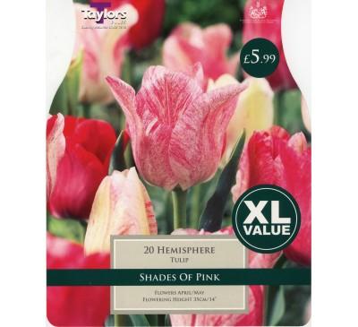 Xl Tulip Hemisphere
