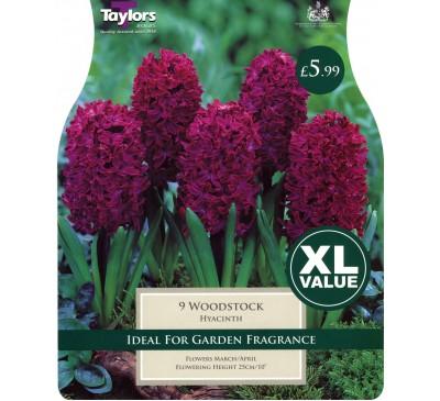 Xl Hyacinth Woodstock