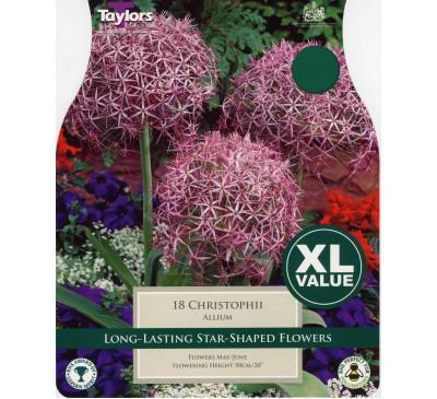 Xl Allium Christophii