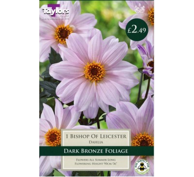 Bishop of Leicester Dahlia