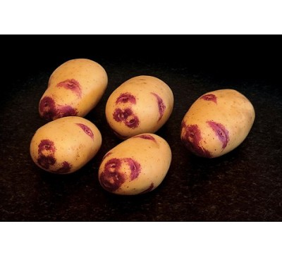 Blue Belle Seed Potatoes 2kg
