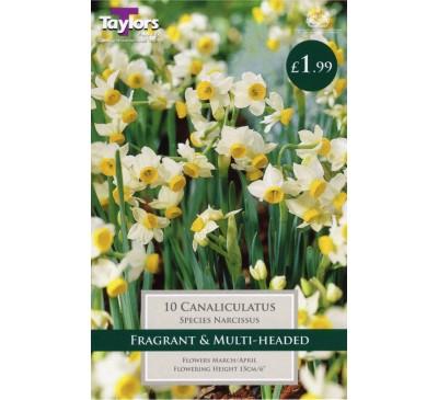 Narcissi Canaliculatus