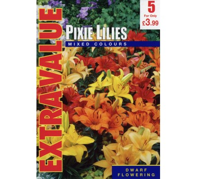 Pixie Lilies Extra Value
