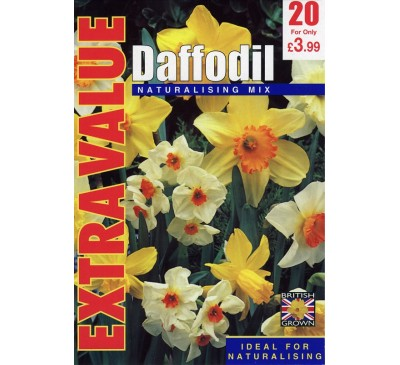 Extra Value Daffodil Naturalising Mix