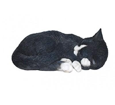 Black/White Cats