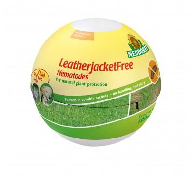Leather Jacket Free - Nematodes