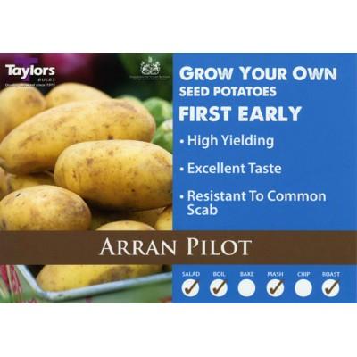 Arran Pilot 2 kg Seed Potatoes