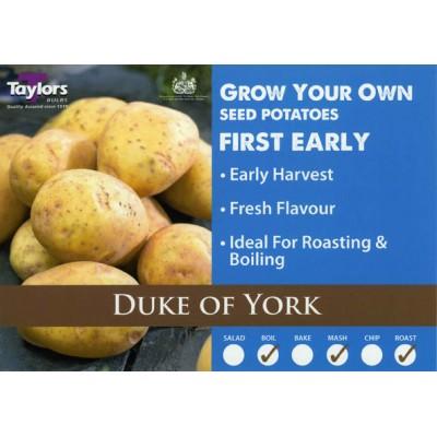 Duke Of York 2 kg Seed Potatoes