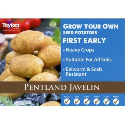 Pentland Javelin 2 kg Seed Potatoes